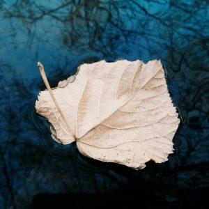 Blätter im Fluss - Achtsamer Umgang mit Gedanken und Gefühlen - Loslassen
